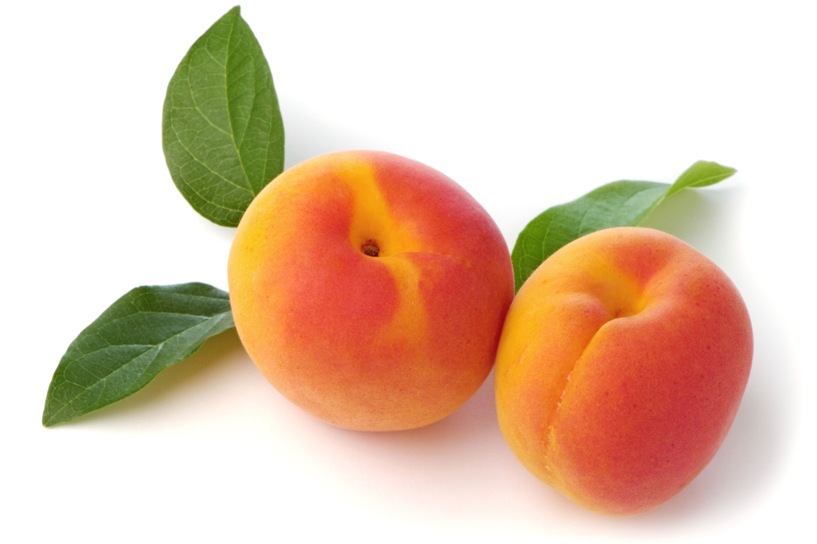 Apricot Sorbet - Wholesale Frozen Yogurt Powder