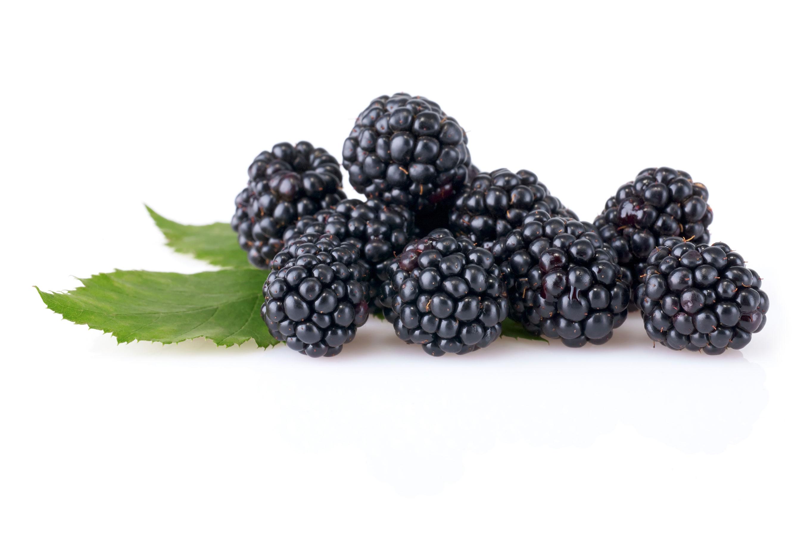 Blackberry Frozen Yogurt - Wholesale Frozen Yogurt Powder