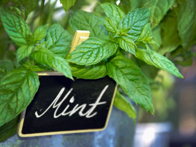 Mint Flavor Frozen Yogurt Flavoring